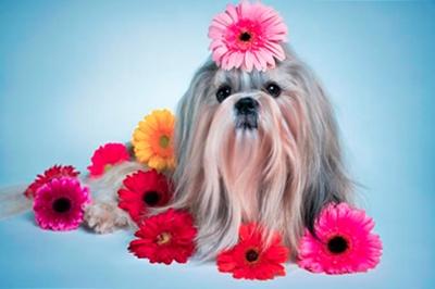 Собачка в цветах